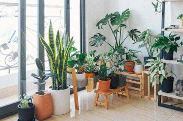 eco friendly interior design concept