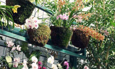 Easy DIY Garden Project Ideas vertical garden